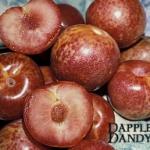 Dapple Dandy Pluot